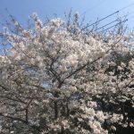 3/28 木曜日のトレーニングの様子!!