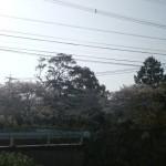 いい天気V(^-^
