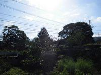 いい天気です!!